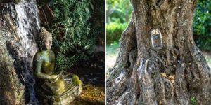 bosque-encantado-Vivir-en-el-TAO